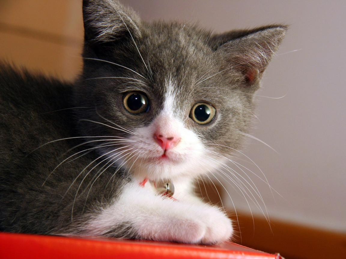 Kenapa Kucing Kalau Dipanggil PUS Noleh Moo Moo Blogs